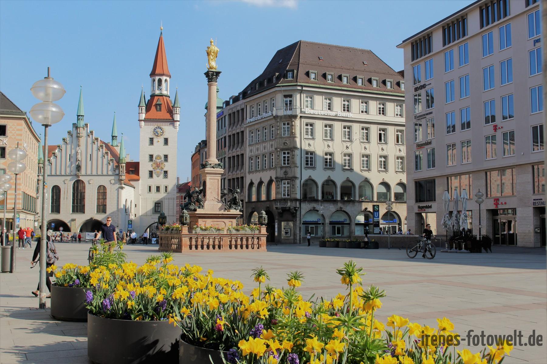 Frühling am Marienplatz