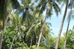 ...mitten unter Palmen