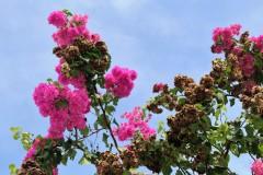 ...herrliche Farben